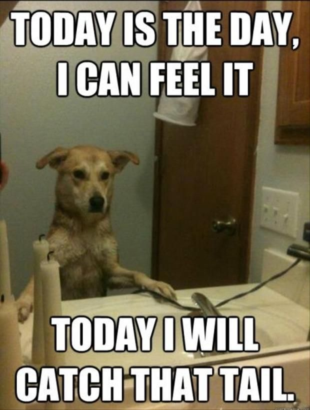 25 Best Funny animal Quotes and Funny Memes .