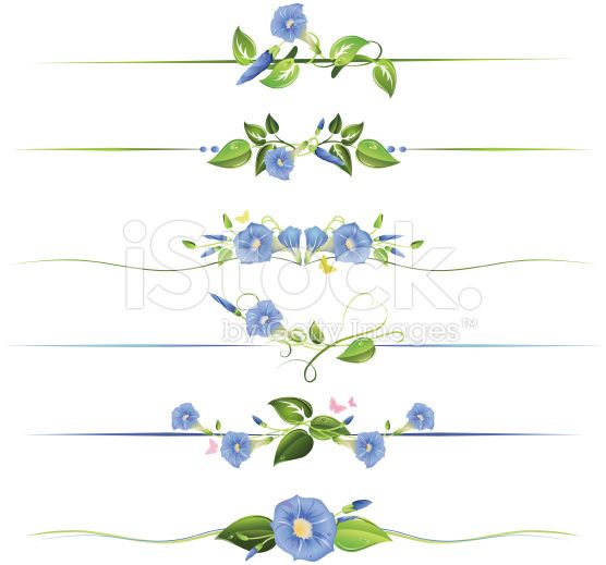 Morning Glory Flowers and Vines Floral Dividers Illustration royalty-free stock vector art