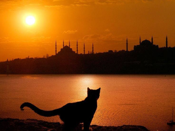 Shape of a cat in istanbul
