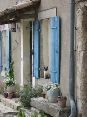 What's Not to Love About Provence?: Siam Cat, Blue Shutters, Doors Window, Benches, Siam Kittens, Colors, Farmhouse Living, Gardens, Provence France