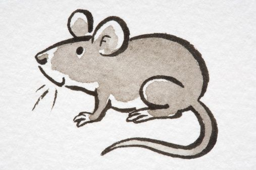Do you have a mouse in your house? Have no fear, you can stop a mice infestation in its tracks!