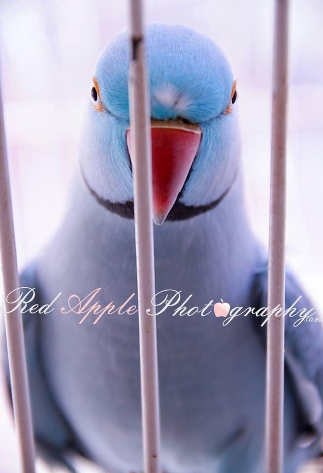 Wrongfully Jailed!!!