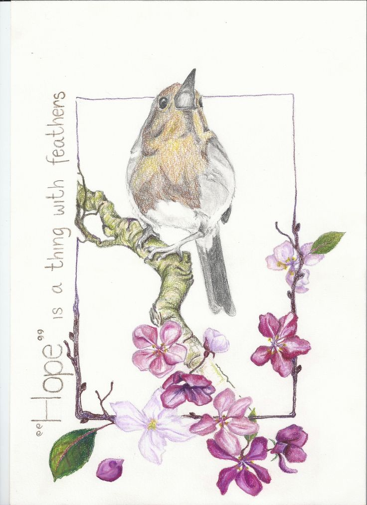 Created by Caroline Dominique Katsburg. Website is upcoming (www.cadomidesign.com) 'Hope is a thing with feathers' (quote from the poem of Emily Dickinson)   Drawing of a Robin.Colorpencils Karisma    Year: 2012