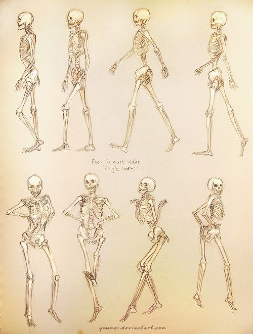 "Skeleton performing ""all the single ladies"" dance by Beyonce"