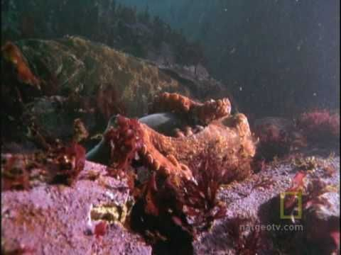 giant octopus attacks man - photo #5
