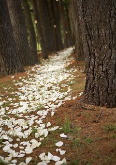 Instead of leaving a trail of crumbs like Hansel and Gretel, how about a trail of white rose petals through the woods?