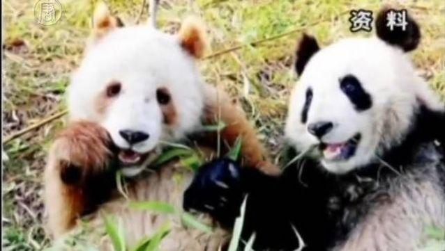 Von blauen Hummern bis zu braunen Pandas bieten diese Kreaturen farbenfrohe Überraschungen. -…   – Adorable Animals