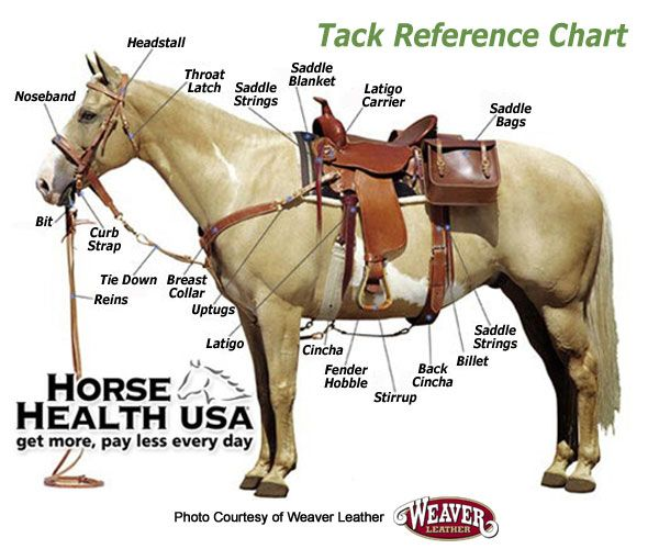 This quick reference photo indicates the proper placement of Western tack on a horse.