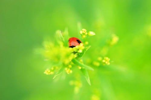 Весенне-Летние фотографии, фотографа под ником Sakura » Фото, рисунки
