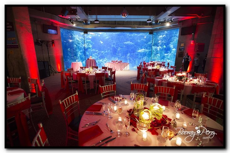 Florida Beach Wedding With Aquarium Reception: 1000+ Images About Florida Venues On Pinterest