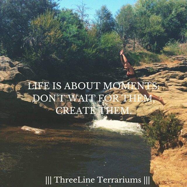 Life is about moments: Don't wait for them, Create them | ThreeLineTerrariums words of the week |