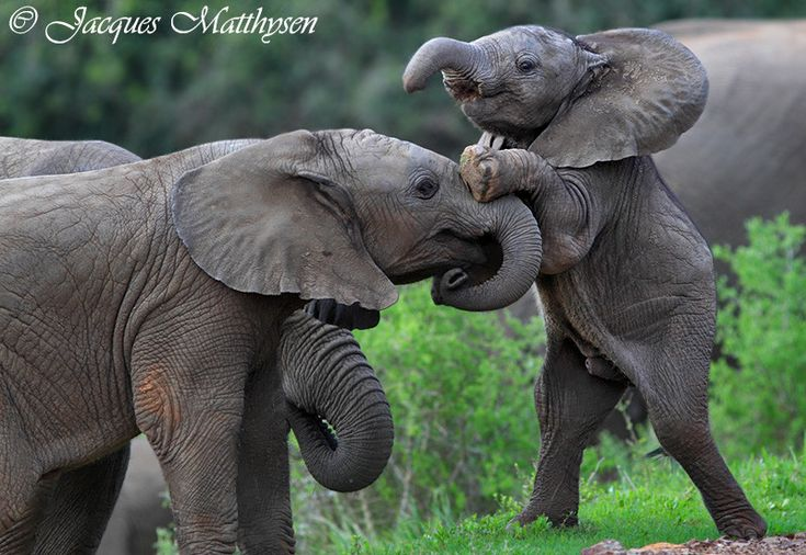 Lots of elephants pictures :)