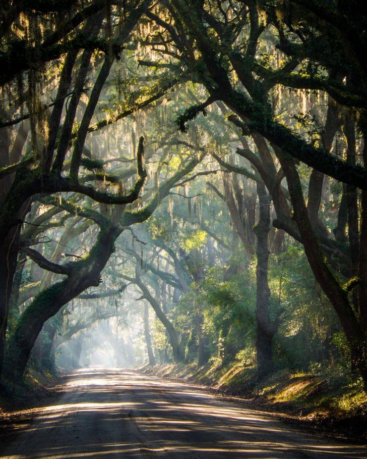 The beautiful rural roads of South Carolina