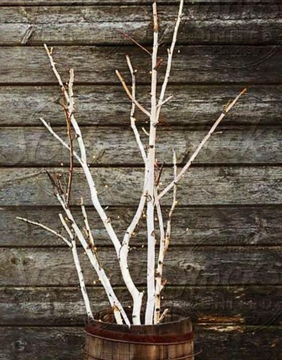 Branchy Forked White Birch Branches White Or Red Brown Fall