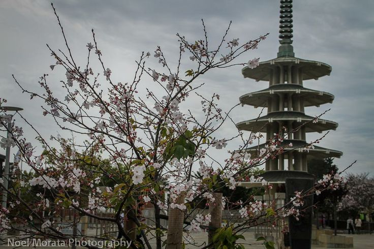 The main plaza at Japantown in San Francisco. Click on the post for more details and images http://travelphotodiscovery.com/san-francisco-cherry-blossom-parade-travel-photo-discovery-43/