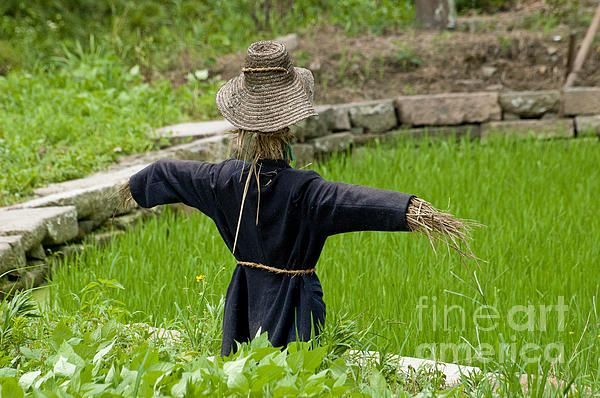 Scarecrow In A Rice Paddy In Wuzhen, China.  Fine Art Photography   http://rob-huntley.artistwebsites.com   © Rob Huntley