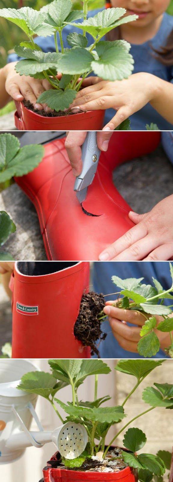 Gebruik anders je oude laarzen om aarbeien in te planten. Wat een leuk idee voor op het balkon!