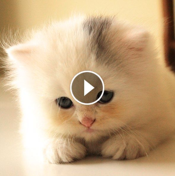 So Cute 3 Videos Babies Kittens Cute Catsandkittens