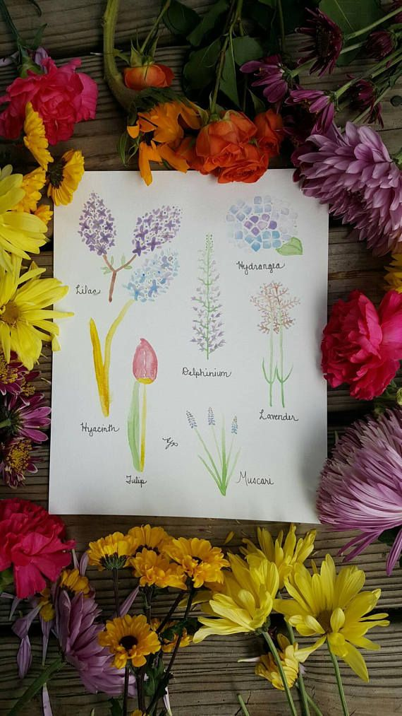 Check out this item in my Etsy shop https://www.etsy.com/listing/521431022/purple-flower-names-watercolor-print