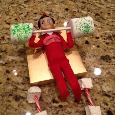 Shelf Elf getting his swoll on!!!    What's your excuse for not training!!!!