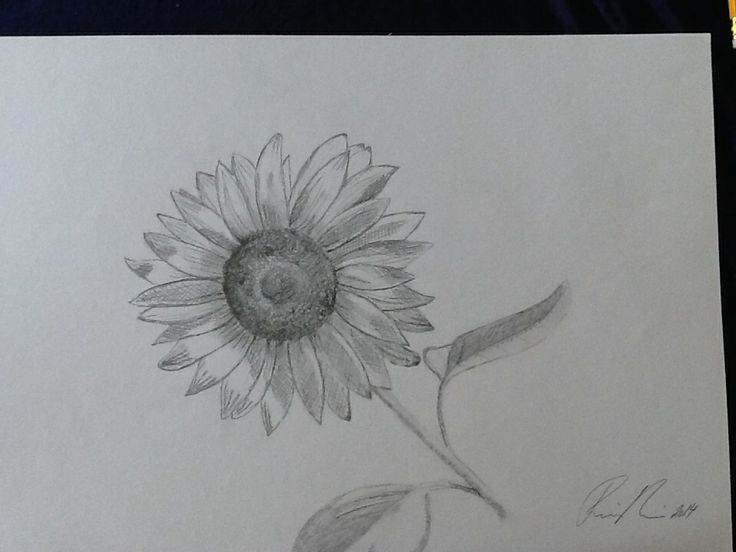 Solsikke tegning 3 - færdig
