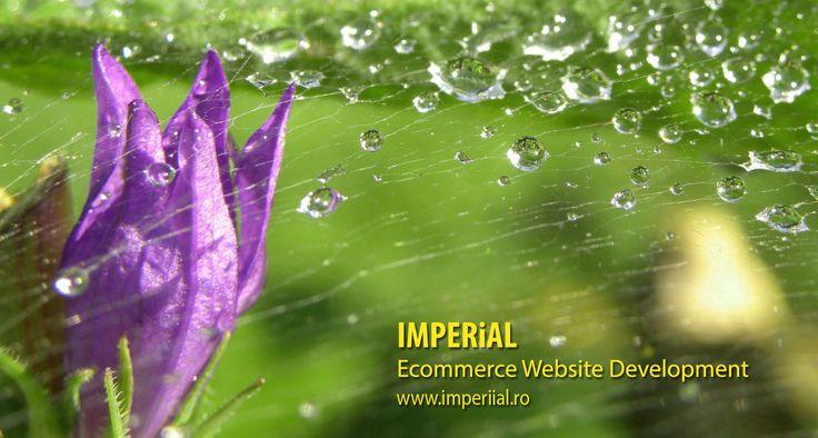Servicii de dezvoltare software.Afla mai multe pe www.imperiial.ro