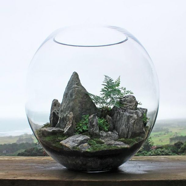 large mountain schist terrarium by bioattic planted glass boxes pinterest terrarium. Black Bedroom Furniture Sets. Home Design Ideas