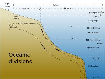 Pelagic fish - Wikipedia, the free encyclopedia