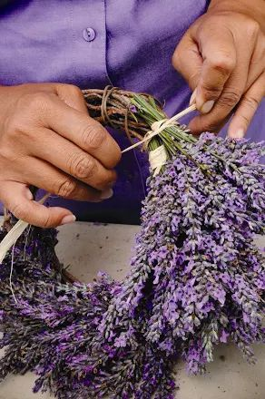 Fotoğraf: Step two of the lavender wreath craft project. PHOTO CREDIT: Ali'i Kula Lavender/The Maui Book of Lavender.