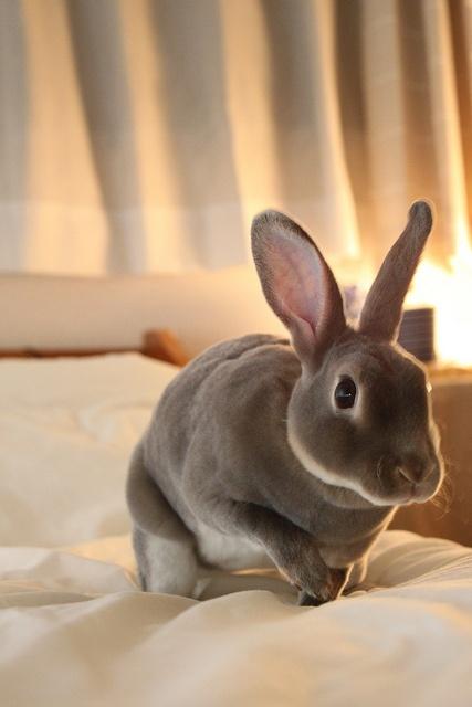 Bunny                                                                                                                                                                                 More