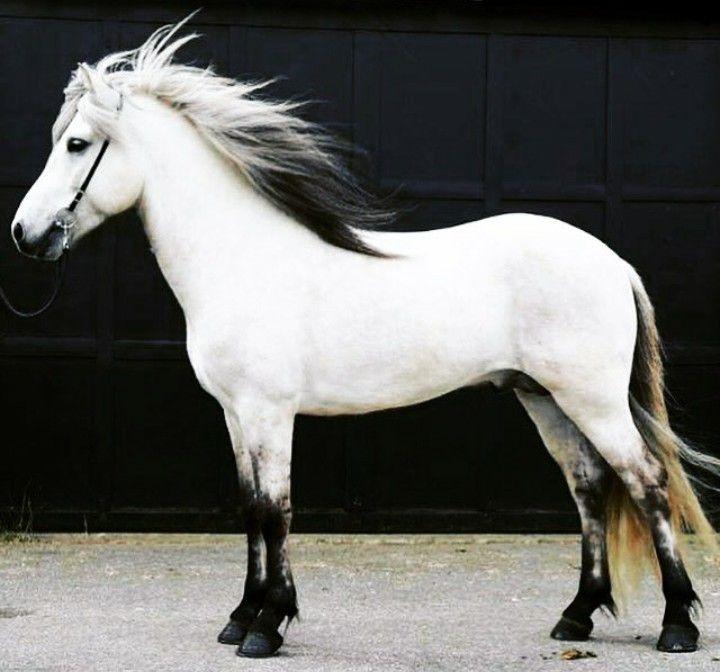 (97) Horseaddict - Photos
