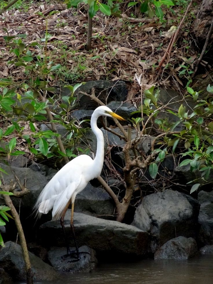 The Heron is a beautiful and elegant bird that is often portaited in artwork throughout Asian culture. In Chinese mythology herons are connected with strength, patience, purity and longevity.