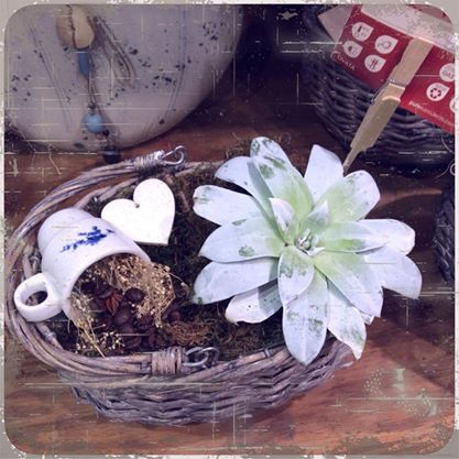 #coffee #succulents my #favorite #plant