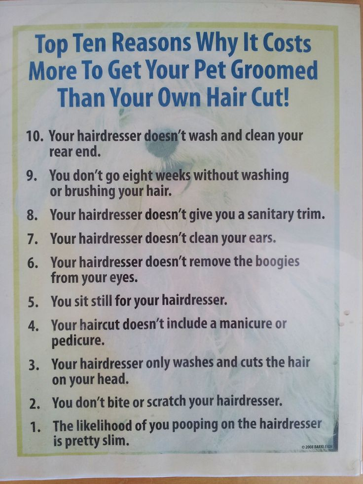 Top 10 Hairstyles For 14 Year Olds 2017: Top 10 Reasons Why It Costs More To Get Your Pet Groomed