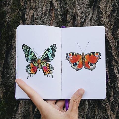 The colors of nature  #butterflies #sketch #sketchbook #Leuchtturm1917es #drawing
