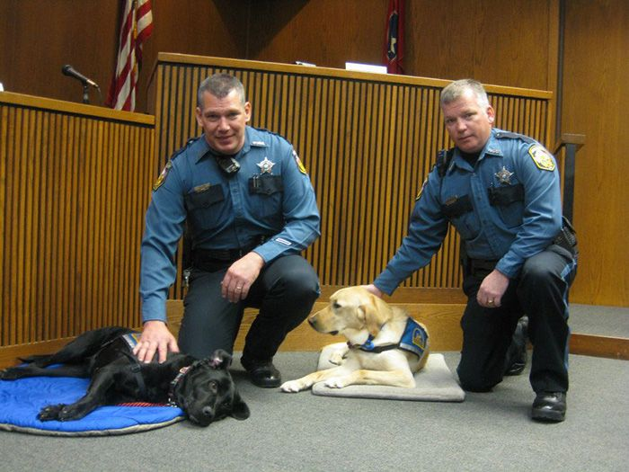 Special Dogs Help Calm Traumatized Witnesses Testifying in Court - My Modern Met