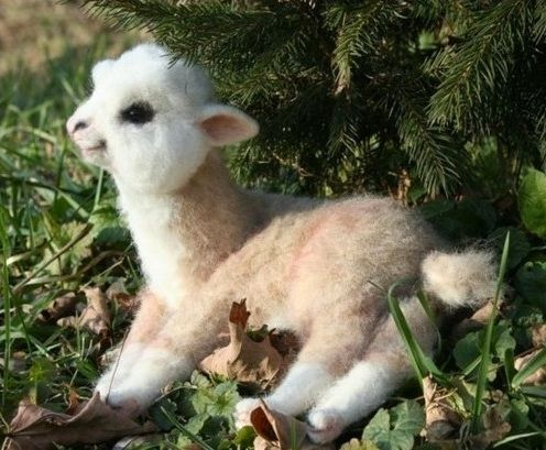 Baby llamas the cutest animals