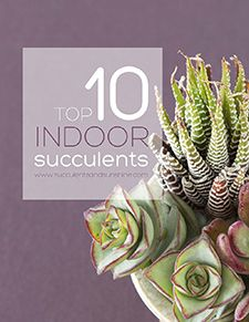Succulents and Sunshine | How to Water Succulent Plants nice arrangement, good balance of color, texture, shape, size