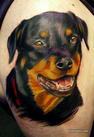 rottweilers animal tattoos and colorful pictures on pinterest. Black Bedroom Furniture Sets. Home Design Ideas