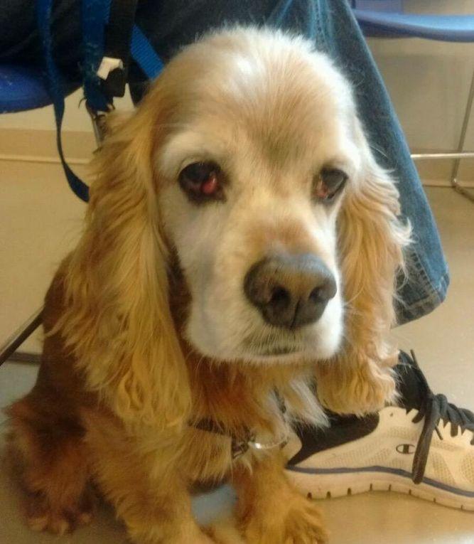 Adopt John Boy On Petfinder John Boy Cocker Spaniel Dog Spaniel Dog