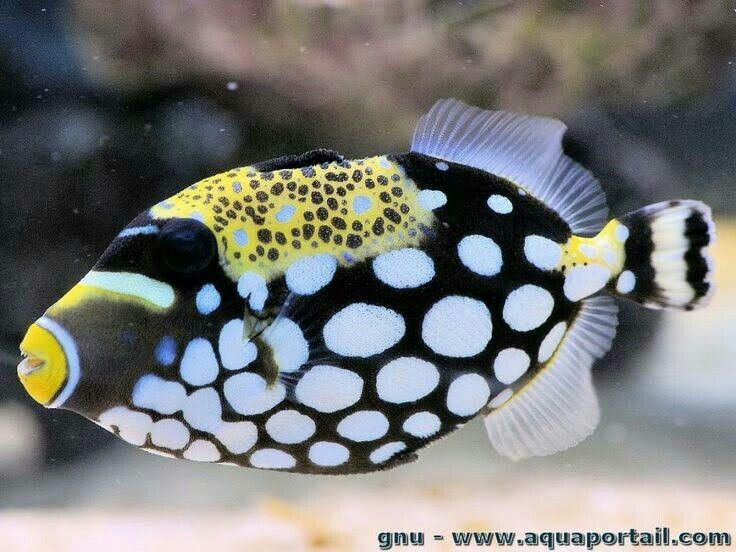 Pin By Ena On Animals Beautiful Sea Creatures Saltwater Fish Tanks Weird Sea Creatures