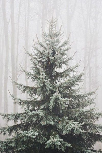 There's nothing better than the smell of fresh pine. This tree is full of decorating possibilities! | Mary Kay
