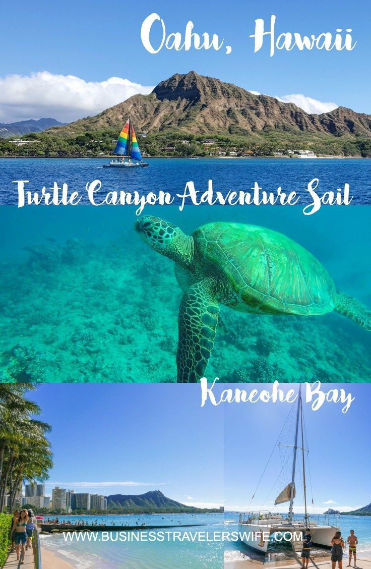 Snorkeling with Hawaiian green sea turtles and sailing in Honolulu are among the highlights of our trip. Highly recommended for your next Hawaii vacation!