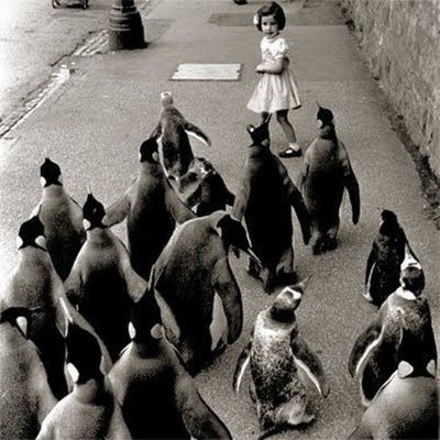 15 awesome vintage photographs with animals