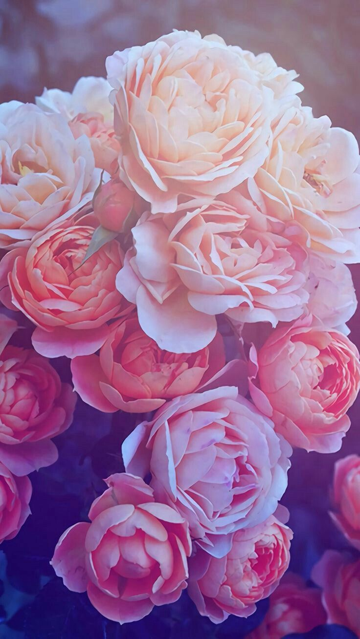 Pin By Joshua Qazi On Dpz In 2020 Rose Gold Wallpaper Flower Wallpaper Wallpaper Iphone Roses