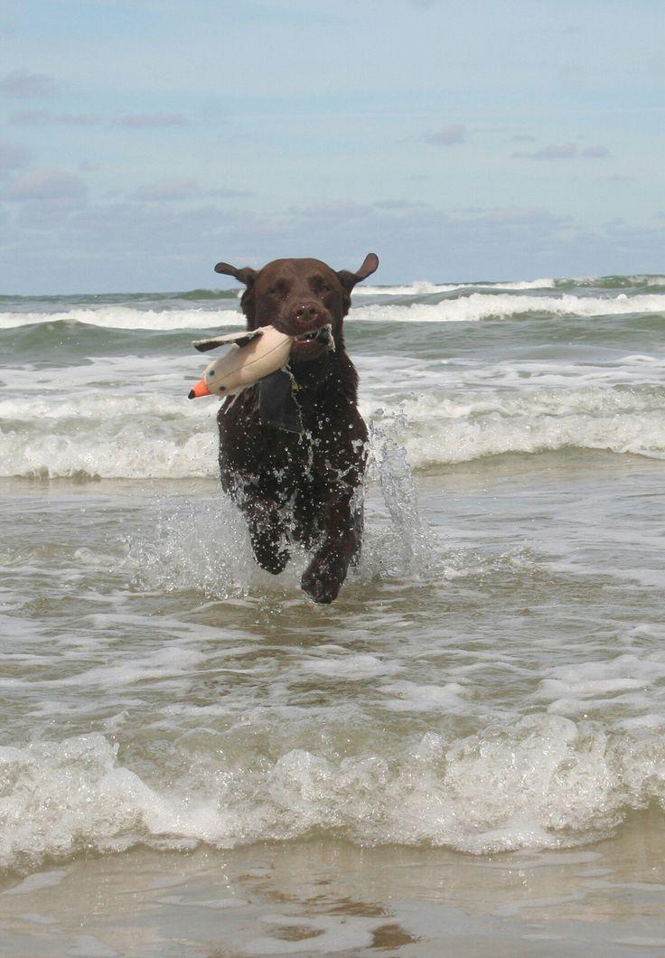 Hunde Foto: Anne und Carlos - Badespaß Hier Dein Bild hochladen: http://ichliebehunde.com/hund-des-tages  #hund #hunde #hundebild #hundebilder #dog #dogs #dogfun  #dogpic #dogpictures
