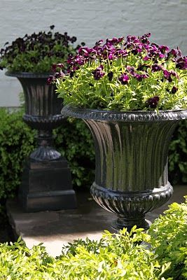 purple pansies + black urns. Not everything has to have a mix of plants. Love! this simple look