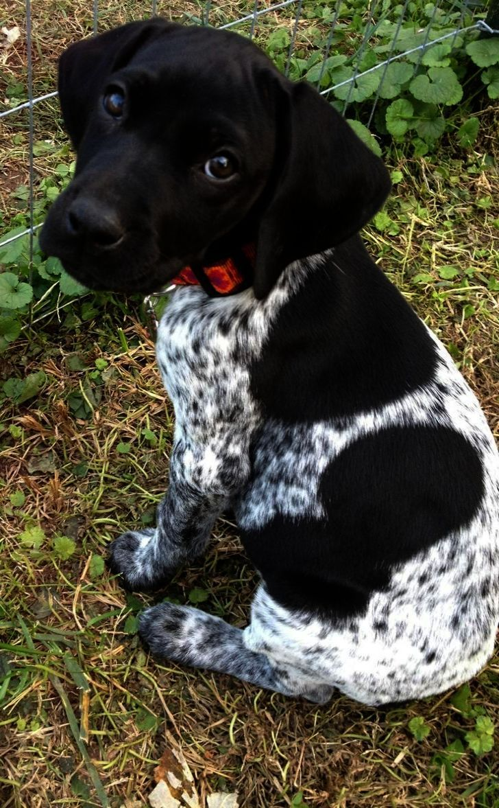 Ah Kittens For Sale Near Me Hoobly Dogs Puppies Pointer Puppies