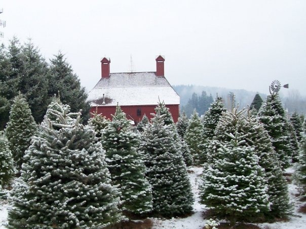 start a xmas tree farm bucketlist - How To Start A Christmas Tree Farm