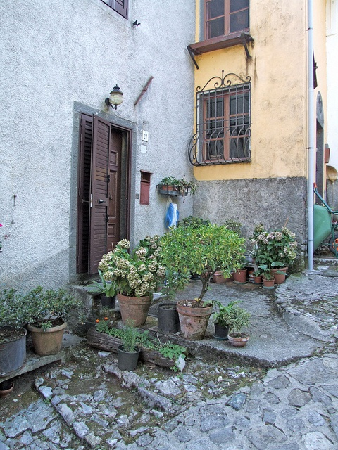 Plants at the front door. Not that I think I'll ever be lucky enough to live in a European city with cobblestone streets at my front door...